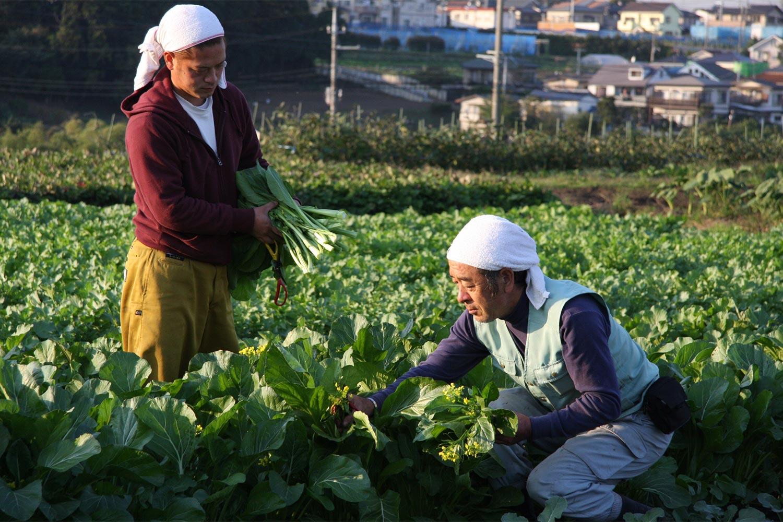 鎌倉の畑と農家をご紹介